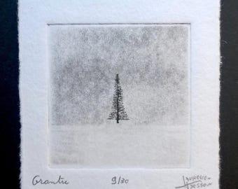 Grantre (fir in norwegian) etching