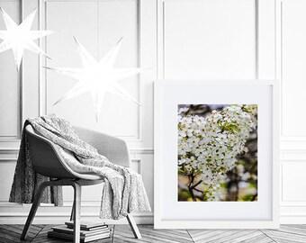 Floral Print, Floral Art, Floral Wall Art, Flower Art, Flower Print, Flower, White Flower Art, Botanical Print, Botanical Art, Photography
