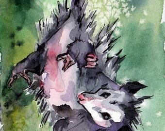 Possum Print - Watercolor Art Reproduction of a Possum Hanging Upside Down - Upsidedown Cutie - Animal Print of Opposum