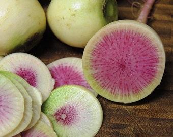 Radish Seeds- Watermelon- 250+