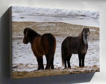 Canvas 24x36; Icelandic Horse, Iceland