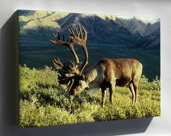 Canvas 24x36; Caribou In Alaska Reindeer