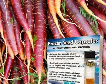 Cosmic Purple Carrot Seeds (Daucus carota) 30+ Rare Medicinal Herb Seeds in Frozen Seed Capsules plus FREE 6 Variety Seed Pack!