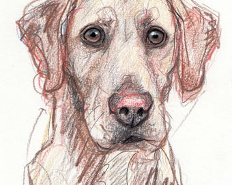 Custom Pet Portraits - Original Art - Dogs, Cats, Horses - Hand Drawn on White Paper, Expressive Sketches - 5x7 portrait with 8x10 white mat