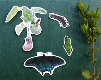 California Pipevine Swallowtail Metamorphosis: Four Vinyl Stickers