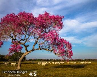 Brazilian Photography, Brazil Landscape Photography, Brazil Print Art, Brazilian Nature Photography, Fine Art Photography; Pantanal, Brazil