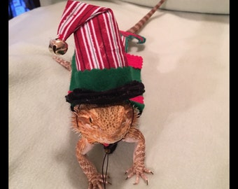 Bearded Dragon Christmas - Elf Hats and/or Elf Capes and/or Elf Antlers Costume