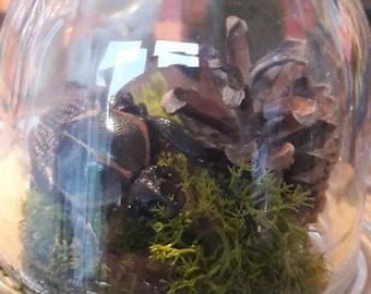 Glass dome taxidermy beetle display