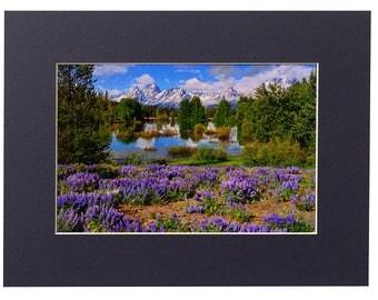 Grand Teton National Park Teton Spring Lupines Matted Fine Art Giclee Print, Modern Wall Art Featuring Fine Art Nature Photography