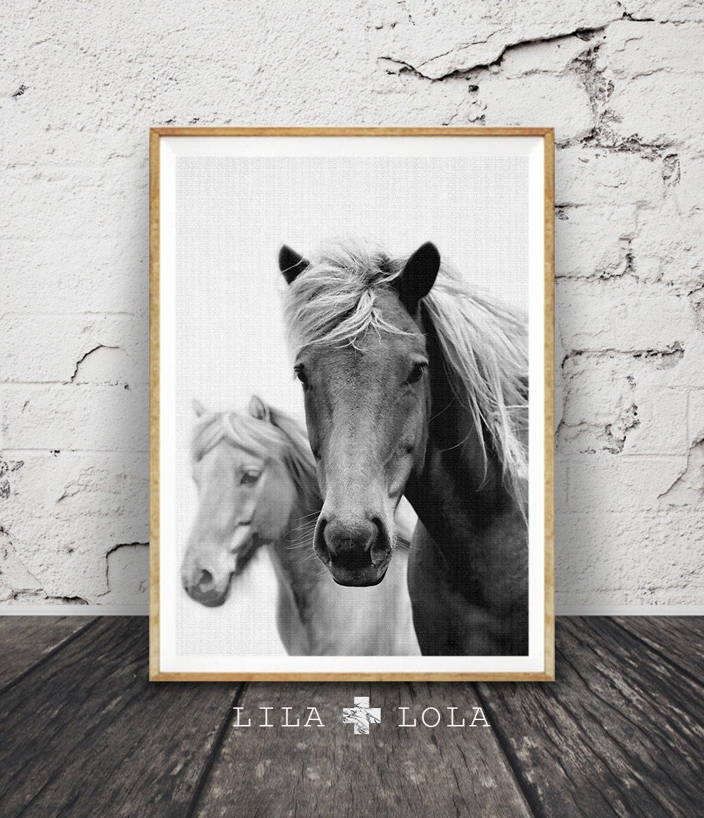 Wall Art Black Horse : Horse photography black and white photo wall art by lilaxlola