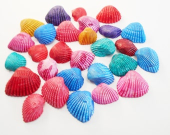 """100 small Dyed Ark Shells Seashell (1/2-3/4"""") Beach Hobby Crafts Decor Colorful."""