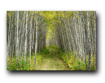 Forest Print, Autumn Print, Landscape Photo, Fall Colors, Wall Art, Wall Decor, Autumn Forest, Nature Print, Fall Leaves, Lonely Path, Aspen
