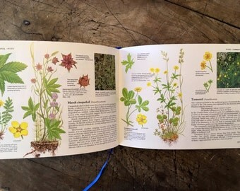 Wild Flowers - Readers Digest book - 1980s flower guide - nature book - flower illustrations - botanical drawings - flowers - altered art