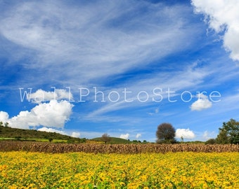 Landscape Photography, Field of Flowers, Blue Sky & Clouds, Sky Photography, Fine Art Photography, Natural Photo Print Photography, Wall Art