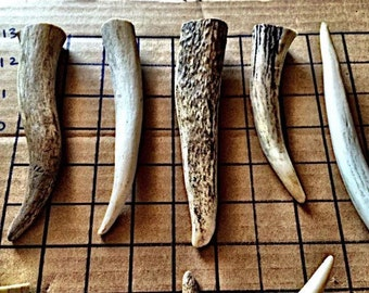 Elk and deer large tips for antler dog chews-sold by the pound. Save by buying in bulk! Also great for crafts or jewelry!