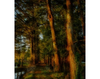 Long Lonely Trail, Trees, Woods, Trail, Lake View, SC, South Carolina