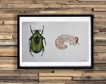 Watercolor Cetoine / Original insect watercolor