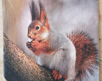 Set of 4 Cute Squirrel Square Paper Lunch Napkins Decoupage Crafts Collage #074
