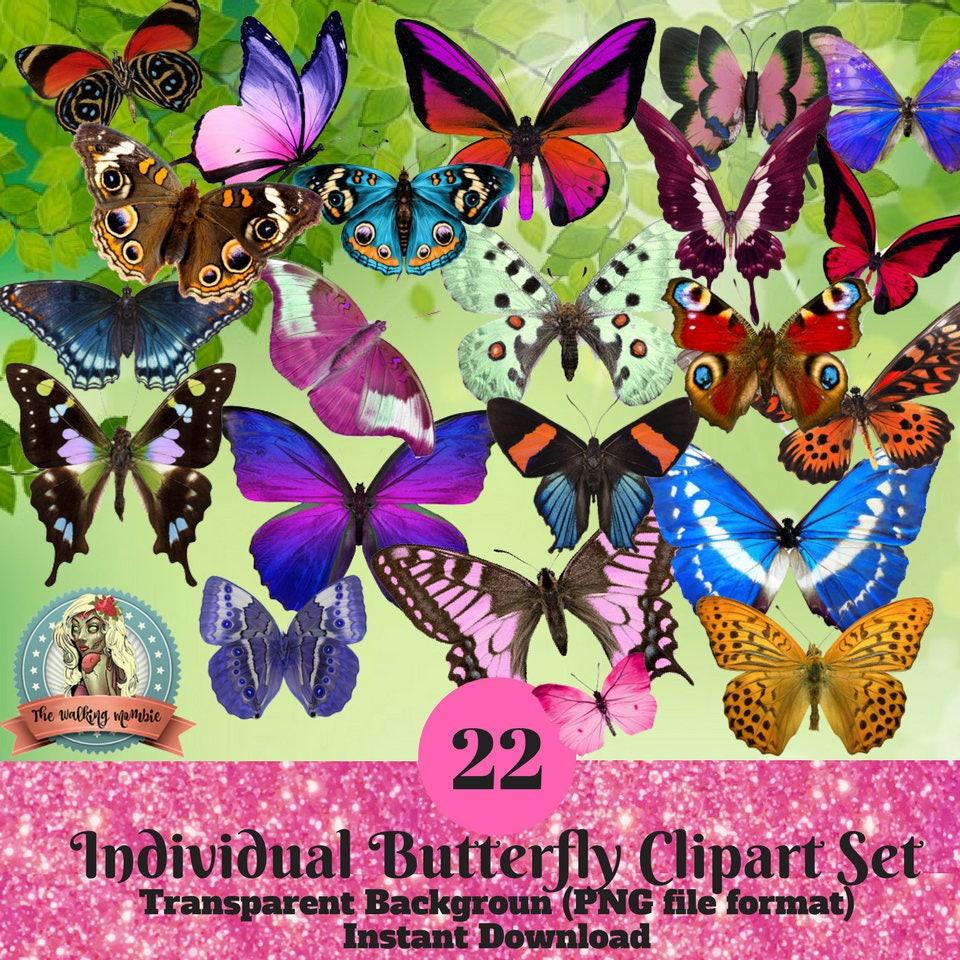 butterfly clipart set 22 individual butterflies butterfly wings