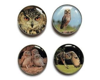 Owl magnets or owl pins, bird magnets, bird pins, refrigerator magnets, fridge magnets, office magnets
