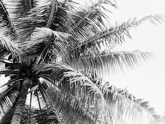 Palm Tree Breeze