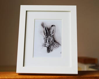 Henry the Hare- A4 print of the original pencil drawing, gift, animal drawing.