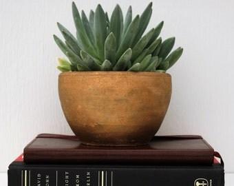PICK 1 - Medium Succulent