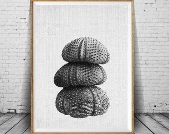 Sea Urchin Print, Zen, Meditation, Nautical Wall Art, Beach Print, Sea Urchin Wall Art, Sea Urchin Poster, Nautical Poster, Bathroom Decor