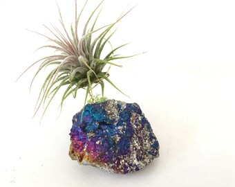 Chalcopyrite with air plant, Desk Accessories/ rainbow gift / Crystal / Boho/ Decor /best friend gift/ dorm room/ peacock gift, peacock gift