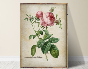 Rose Print Rose Art Rose Wall Art