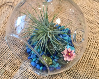 Hanging glass terrarium with ionantha tillandsia, frog and lilly pad and blue stone