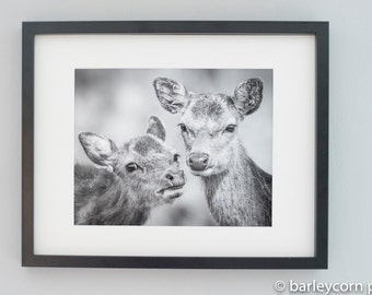 Deer Friends- FREE POSTAGE-Photographic print in black and white- wildlife photography- nature photography-animal portrait- deer print