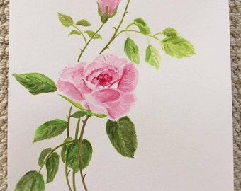 English Rose Watercolor Painting