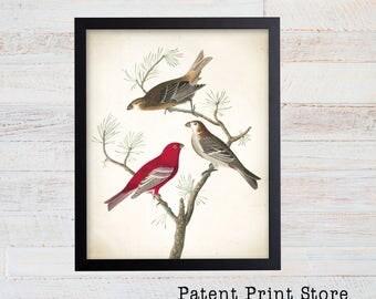 James Audubon Pine Grosbeak Art Print. Bird Print. Audubon Prints. Bedroom Art. Bird Artwork. Bird Print. Bird Art Print. Living Room.