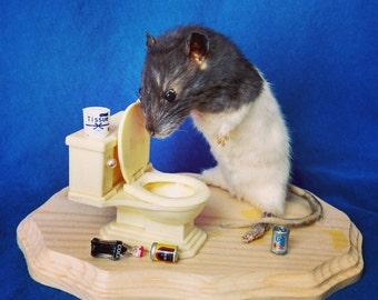 Taxidermy rat/drunk/hangover/anthropomorphic