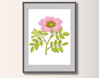 Dornbusch, a Dogrose art print, art posters, botanical posters, rose poster