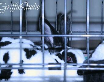 Rabbit Photo, Original Photography, Photo Print, Rabbit Art, Wall Art