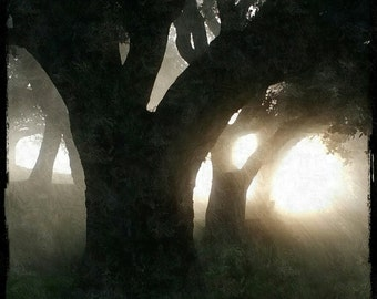 Trees, Shadows and Fog in the Morning Sun