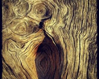 Fallen Tree Detail