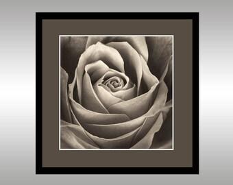 Timeless Rose - Fine Art Photograph - Giclée Print - Wall Art - Nature - Flower - Romance