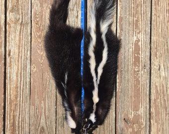 2 New WHITE STRIPED Tanned SKUNK Skin ,Fur ,Hide Log Cabin Taxidermy #1900