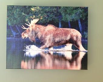 "Moose art, Moose photography, Bull Moose wildlife photography. ""Surging through the rut"""