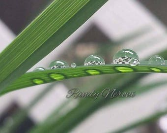 Water on grass.