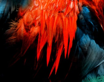Art Print-Abstract Feathers #5