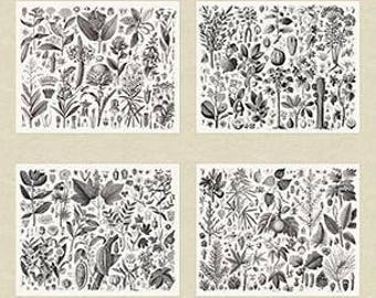 Encyclopedia Terrestria Botanicals Neutral Andover 100% Cotton Fabric per panel