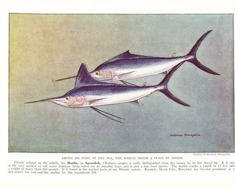1939 Fish Print - Marlin Spearfish - Vintage Antique Nature Science Animal Art Illustration Cabin Cottage Home Decor for Framing