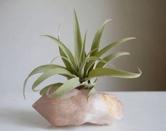 Air Plant Crystal Garden, Real Raw Quartz Point, Hygge Decor, Unique Airplant Display, Unique Gift For Boho Friend, Sister, Under 50
