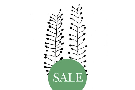 SALE | Botanical Print: Ackertäschelkraut on handmade paper | floral illustration | STUDIO KARAMELO