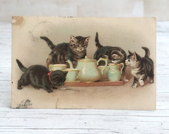 English Victorian Kitten Postcard little kittens cream from a tray of a tea 1905 cats Paper Ephemera London Photography Prop stylist prop