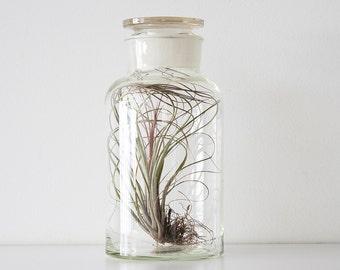 Vintage Large Ground Glass Apothecary Jar